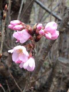 春の可愛い